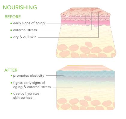 SGVegan_Suki_pure_facial_moisture_nourishing_graph