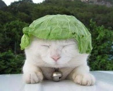 Wayfaringvegans_vegan cat